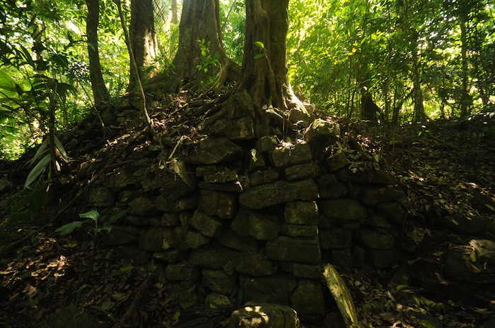 The section of the wall that I found. Photo by Everett Redus.