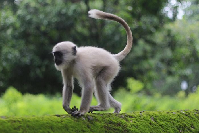 Monkeys roamed the streets in India. Photo by Joan Vinson.