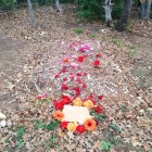 A burial site in Eloise Woods, a Green Burial Park outside of Austin. Photo courtesy of Ellen Macdonald.