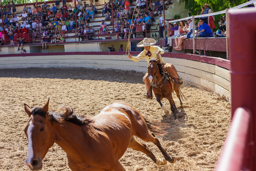 A charro swings his lasso in preparation of capturing a horse at a Day in Old Mexico and Charreada. Photo by Scott Ball.