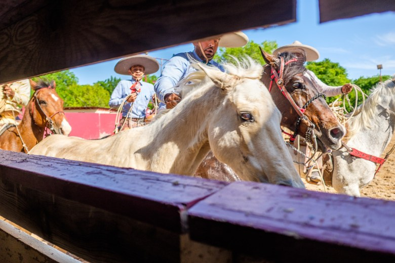 Charros perform at a Day in Old Mexico and Charreada. Photo by Scott Ball.