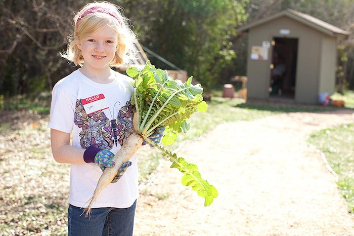 A girl unearths a daikon radish. Photo by Rachel Chaney.