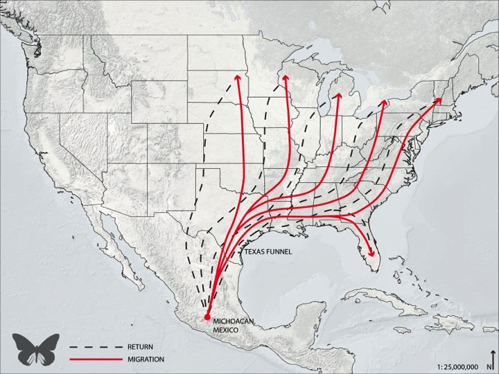 Monarch migration map