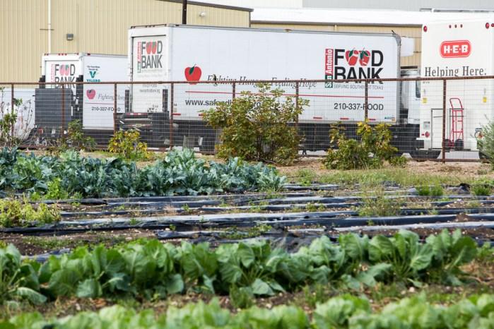 San Antonio Food Bank along with H-E-B trucks park near the warehouse and garden at the San Antonio Food Bank. Photo by Scott Ball.