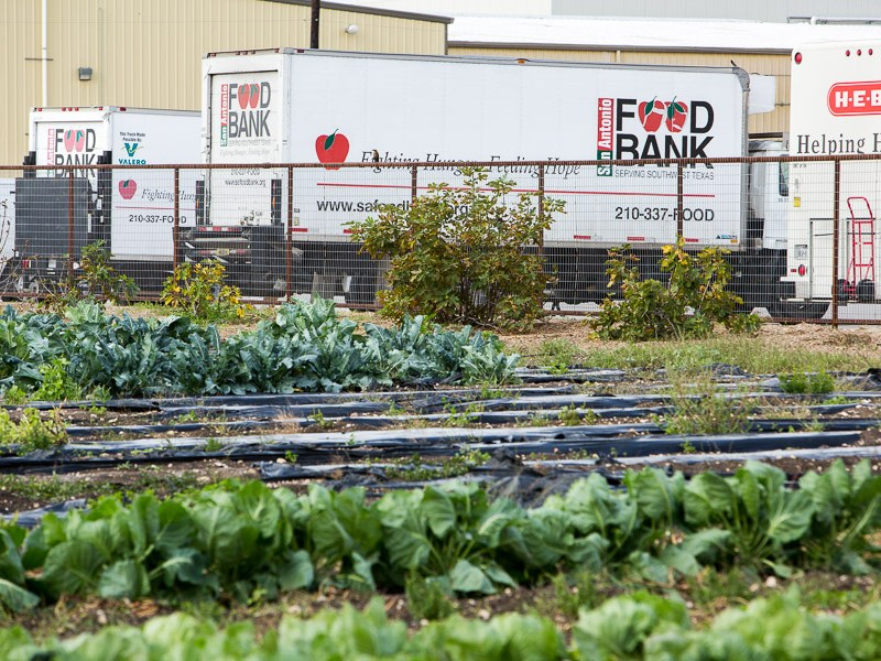 San Antonio Food Bank along with H-E-B trucks park near the warehouse and garden at the San Antonio Food Bank. Photo by Scott Ball.
