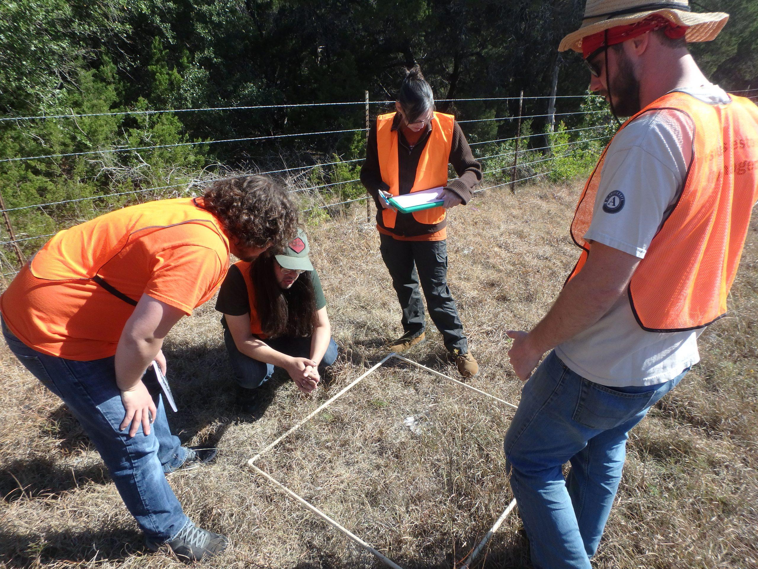 UTSA students monitor for milkweed