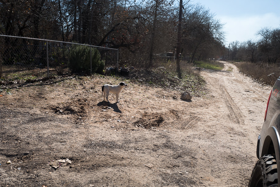 A dog stands in a hole caused by years of vehicular traffic and weather. Photo by Scott Ball.
