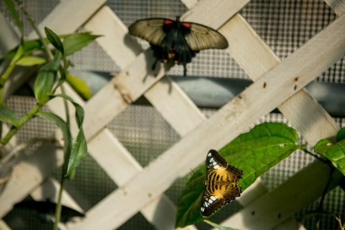 20160226_KathrynBoydBatstone_Butterflies-6