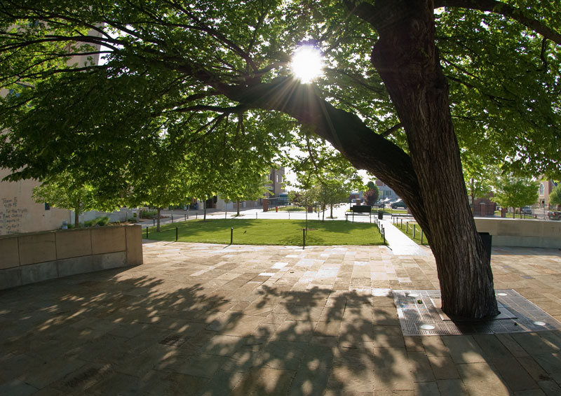 This American elm dates back 90 years – to a time this area was a residential neighborhood. It shaded a parking lot on the day of the attack and was showered with fragments of steel, bricks, and glass. But it's still alive, still thrives; a symbol of the will of the people. Image courtesy Oklahoma City National Memorial.
