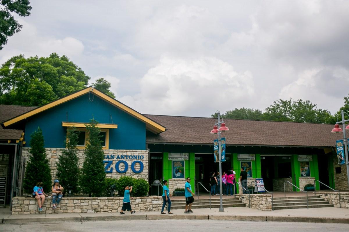 Families enter the San Antonio Zoo. Photo by Kathryn Boyd-Batstone