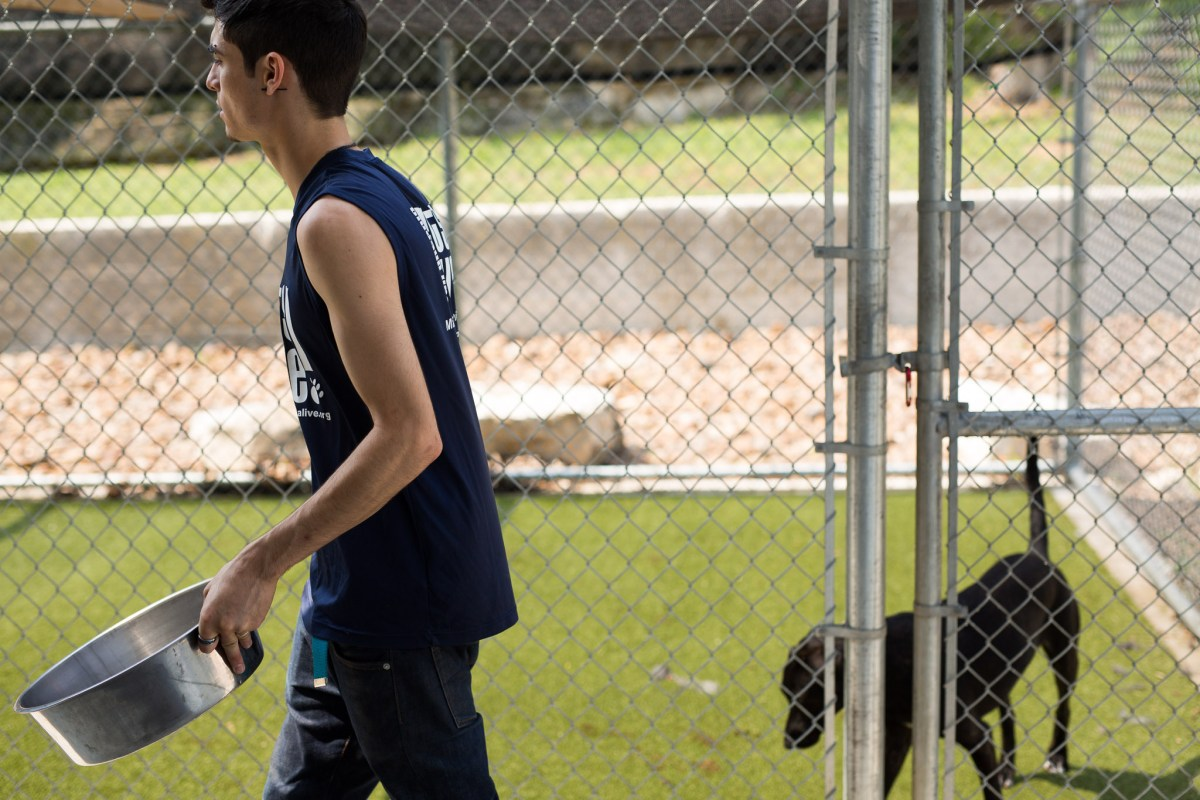 SAPA employee Alex Hill drops off chew toys to dogs in outside enclosures. Photo by Scott Ball.
