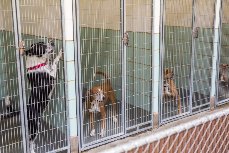 Dogs bark for attention as employees walk by their temporary shelters. Photo by Scott Ball.