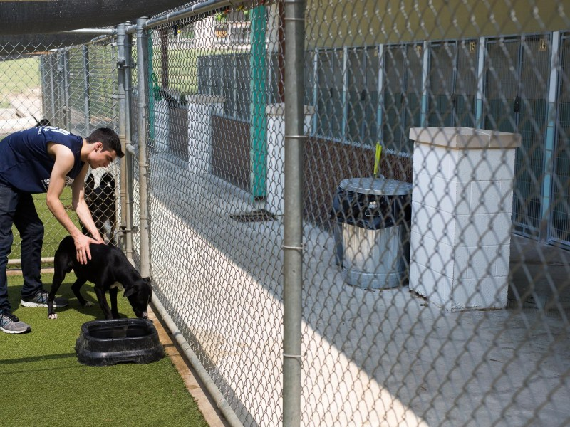 SAPA Employee Alex Hill pets a dog after cleaning his enclosure and refilling his water. Photo by Scott Ball.
