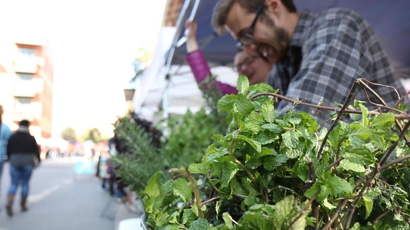 Mitch Hagney's leafy greens at a farmers market. Photo courtesy of Freight Farms.