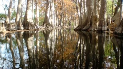 A view of Cibolo Creek. Courtesy of Cibolo Nature Center & Farm.