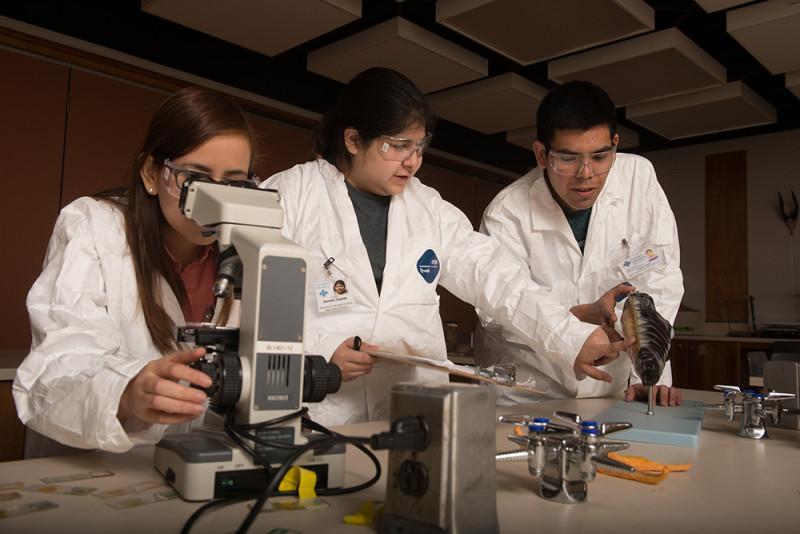Students at the St. Mary's University biology lab. Photo courtesy of St. Mary's University.