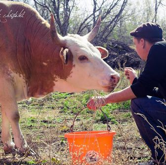 Chef Cooperatives President Stephen Paprocki gets to know a cow at Mesquite Field Farms. Photo from Chefs Cooperatives