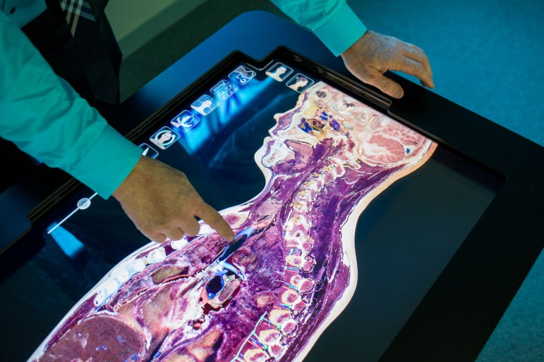 Witte Museum Curator of Anthropology and Health Bryan Bayles points to an interactive screen on the Anatomy Table.