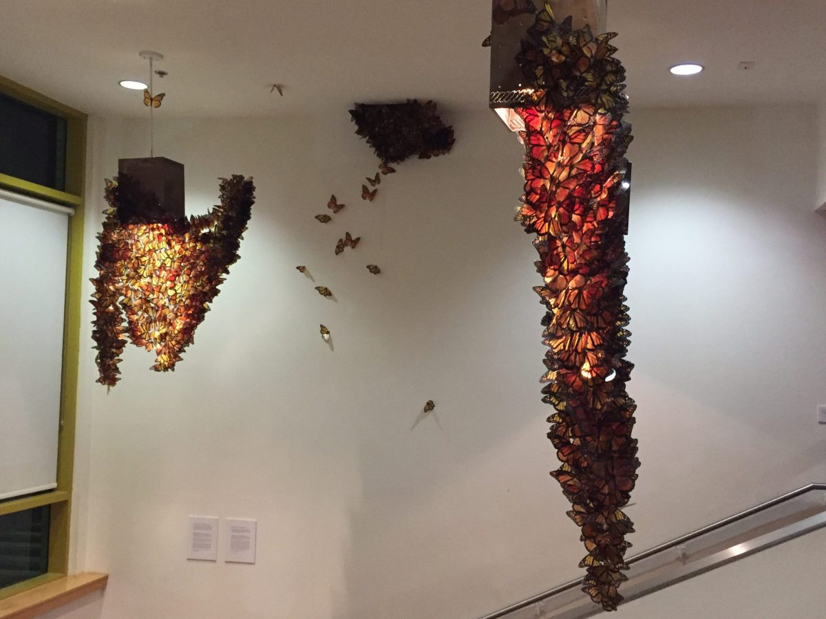 """The art installation by Mexican artist David J. Romero titled, """"De donde van las mariposas,"""" replicates the Monarch butterfly roosting sites."""