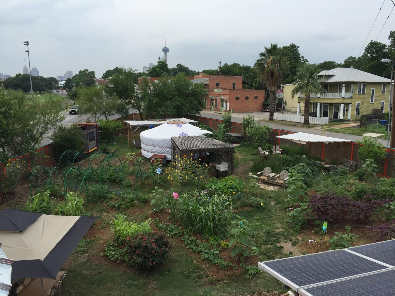 The view from the roof shows the beautiful biodiversity of the growing space in contrast to the gray background of the city.