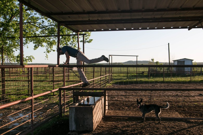 El Capote Ranch owner and Agex Inc. Chief Executive Officer Wendel Thuss hops a fence while Nala the dog watches.