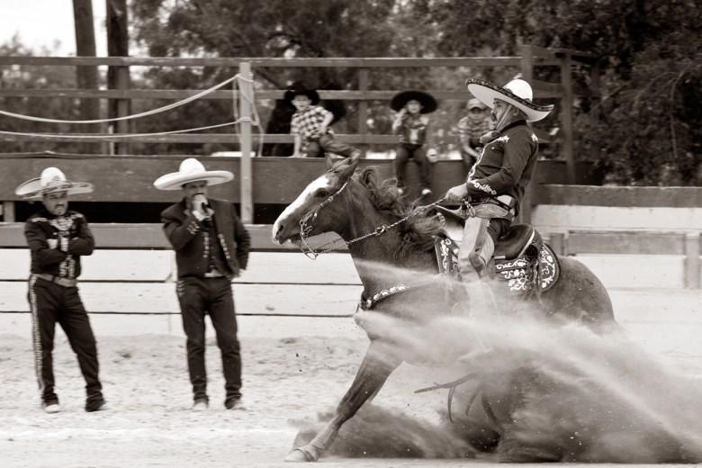 Horse Reining.