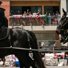 Crowds wave to the horses from their balconies during the Battle of Flowers Parade.