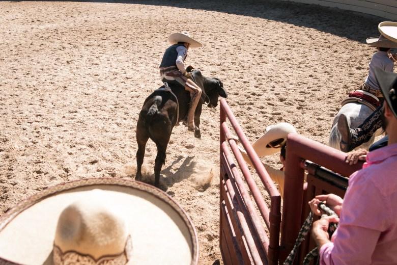 A charro rides a bull at A Day in Old Mexico & Charreada.