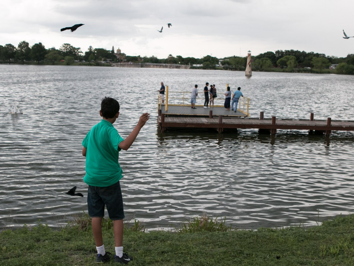 A young boy throws food for the birds at Woodlawn Lake Park in District 7.
