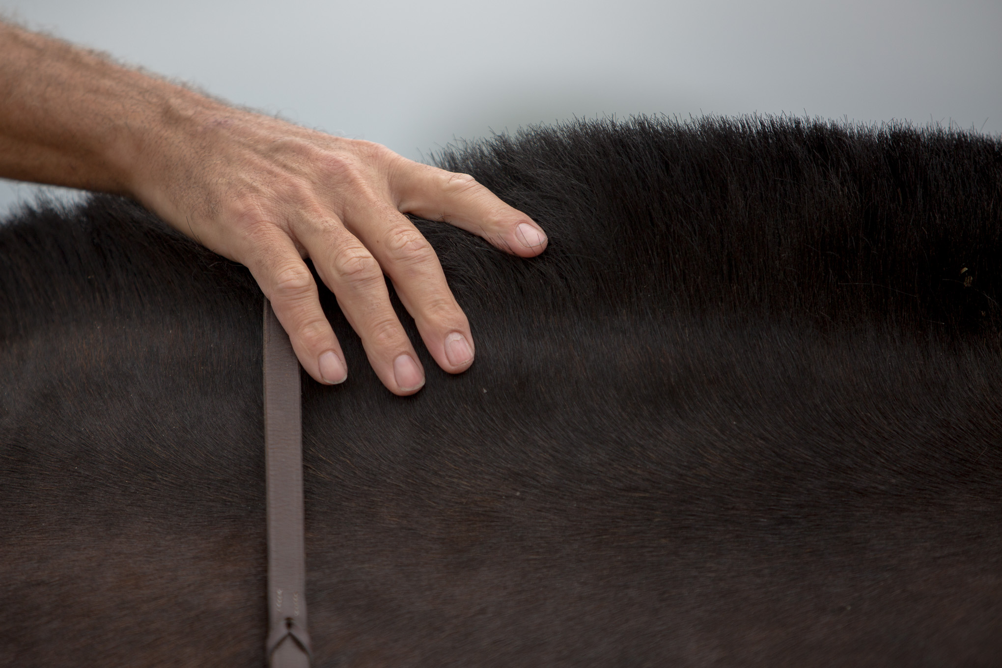 Stable Master Jonathan Deeley rubs the neatly trimmed mane of a Caisson horse.