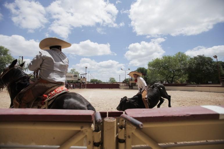 A charro competes in the bull riding event at the 70th anniversary of Charreada in San Antonio.