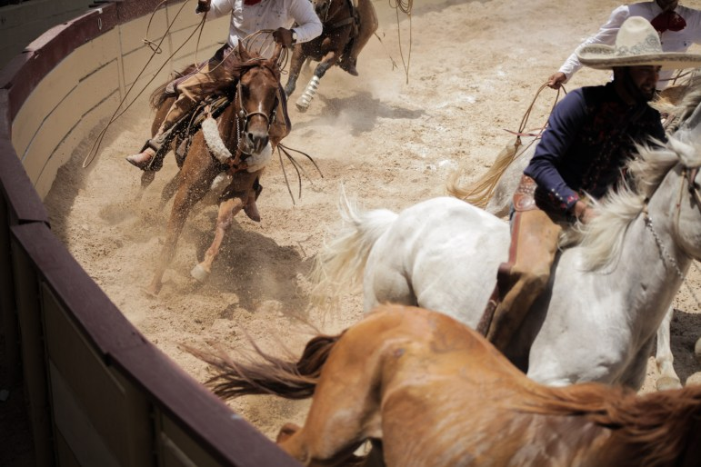 Charros compete in the piiales event in which a running horse is roped by the hind legs and brought to a stop at the 70th anniversary of Charreada in San Antonio.