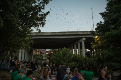 A large crowd gathers to watch the bats flying from the I-35 underpass at the 5th Annual Bat Loco Bash.