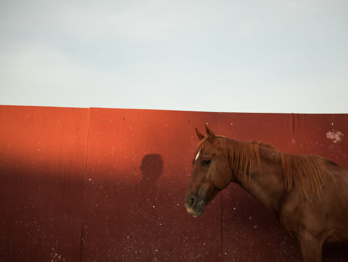 Luis Parra Villanueva's shadow is projected next to Bloodbuzz's head in the arena at sunset.