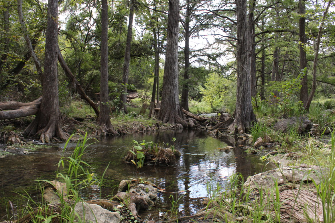 Water in Honey Creek flows past cypress trees on its way to the Guadalupe River near State Highway 46 in Comal County.