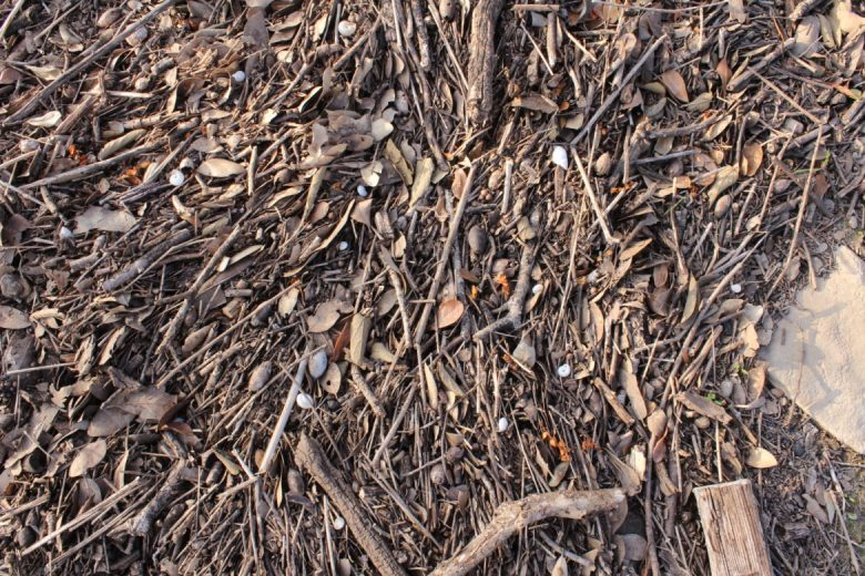 Snail shells and pieces of plastic stand out among the sticks, leaves, and acorns left behind by floods at Stone Oak Park.