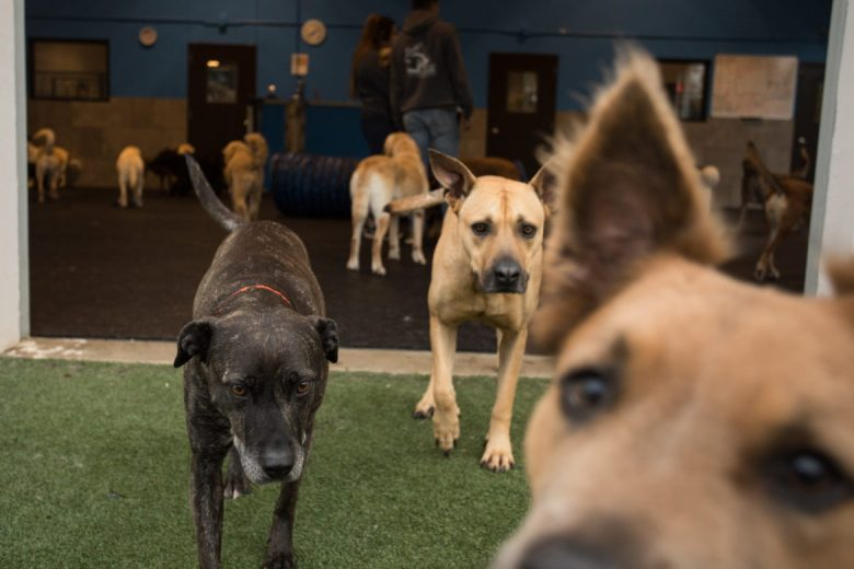 Dogs play outside in the large dog area.