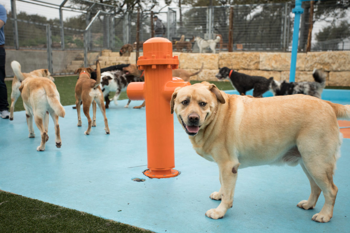 Dogs play outside in the future splash pad of the large dog area.