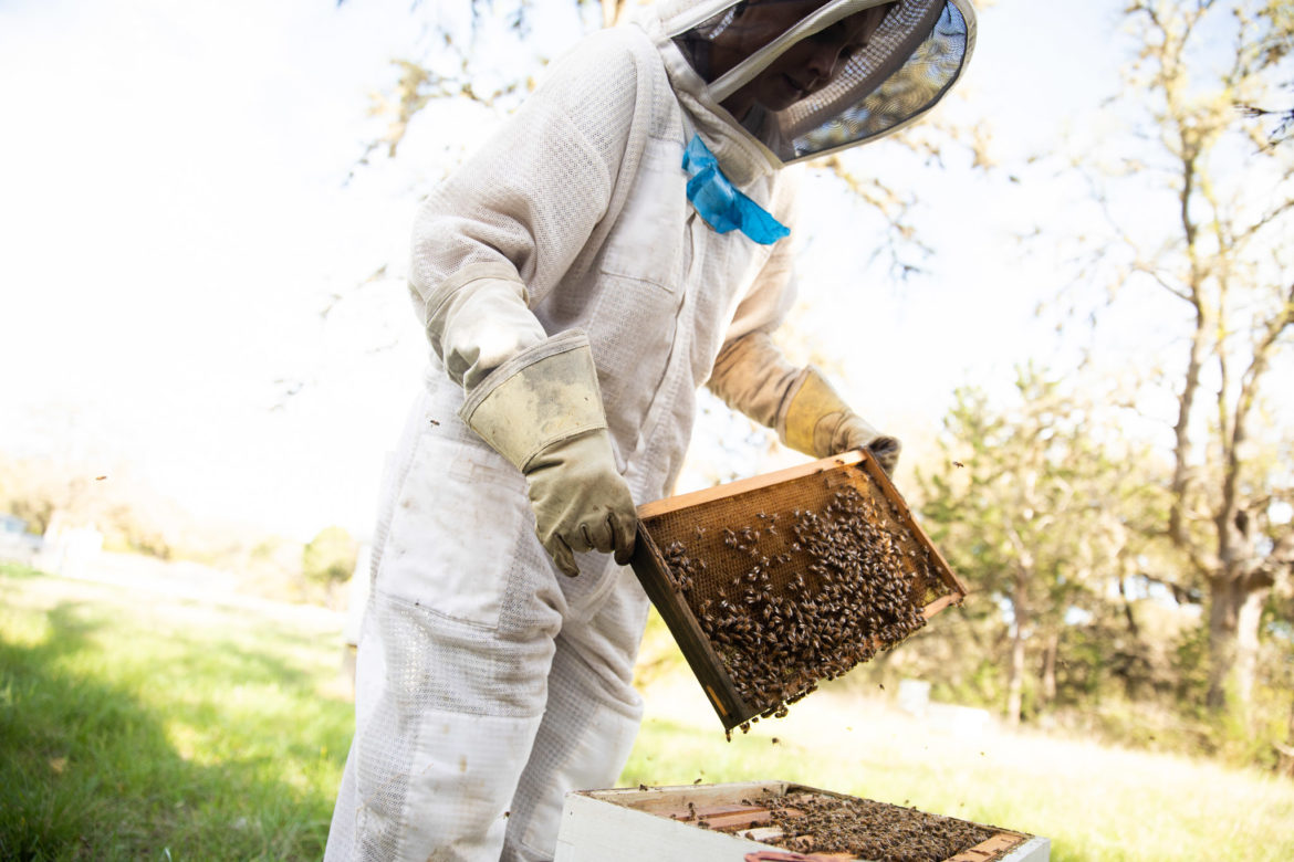 EntomologistMolly Keck inspects one of her beehives as warmer weather and spring approaches.