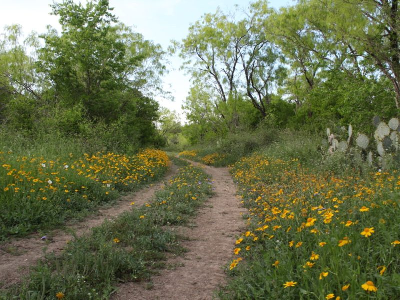 Wildflowers bloom beside a trail at the Land Heritage Institute.