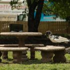 A water fowl sits on a bench next to Eden Duck Pond.