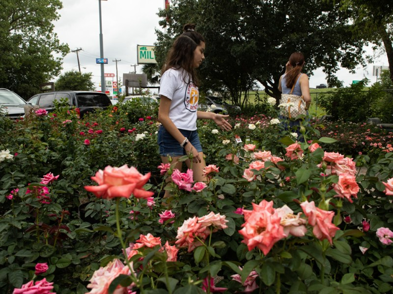 People walk through the rose garden.