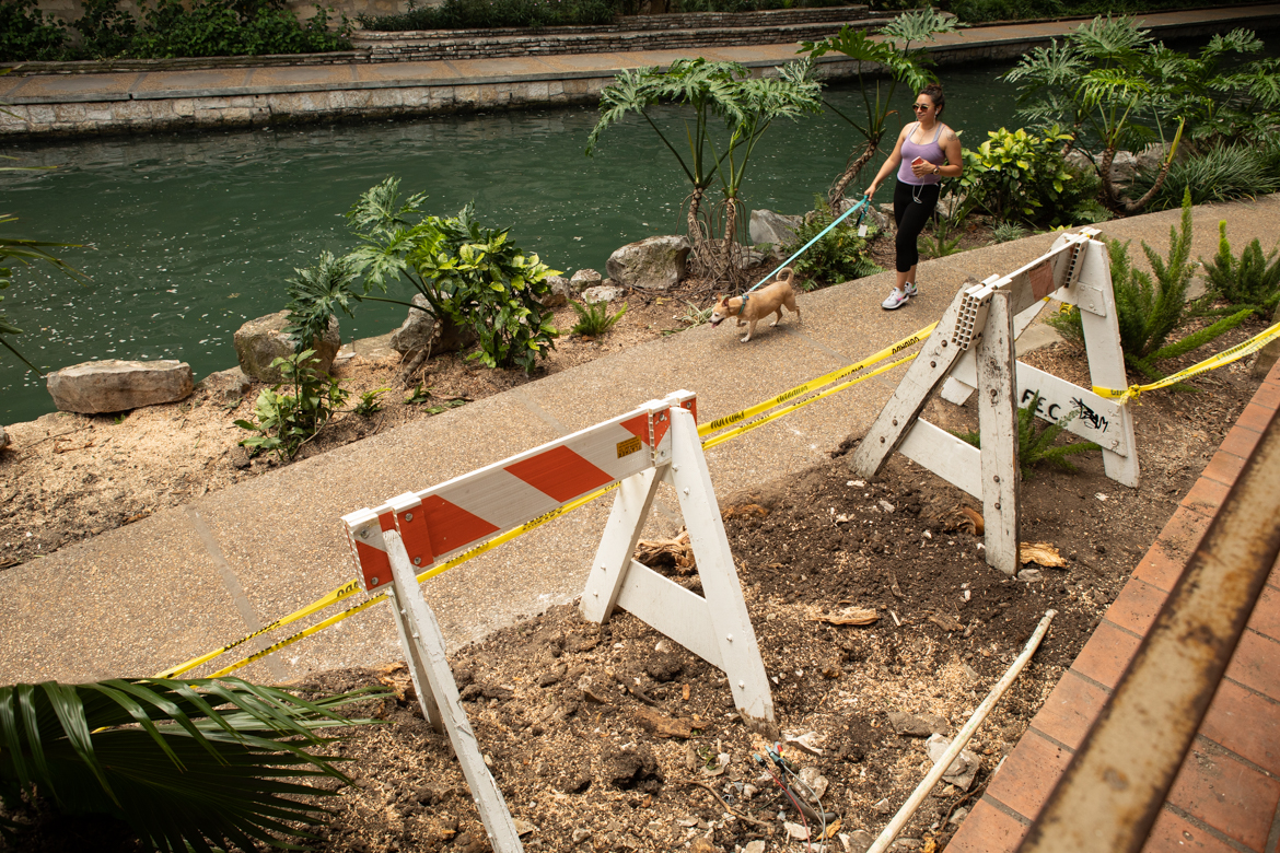 A woman walks her dog next to the caution tape which remains where the tree was uprooted.
