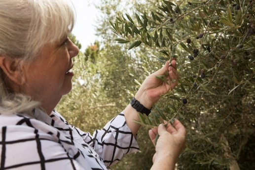 Deborah Sibley examines the Spanish Arbequina olives in the olive orchard on her property.
