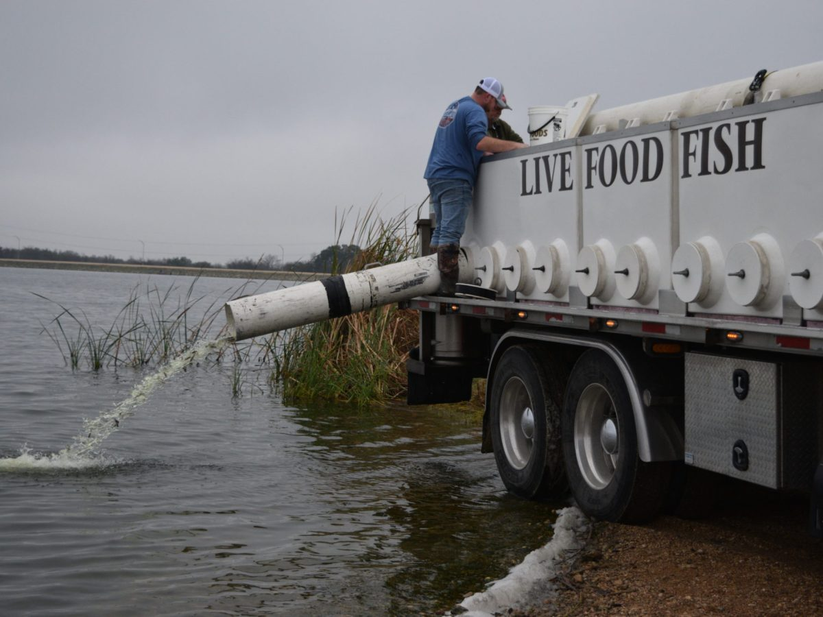 Workers stock channel catfish at CPS Energy's Braunig Lake on San Antonio's South Side.