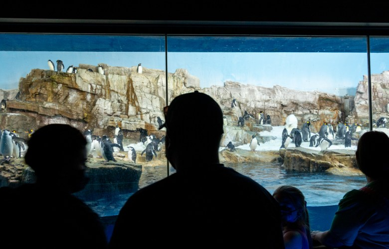Visitors check out the Penguin exhibit at SeaWorld San Antonio during Spring Break. Wednesday, March 17, 2021.