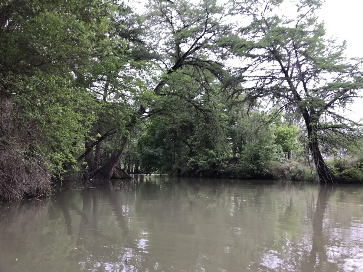 The Guadalupe River flows high and muddy in April 2021 following recent rains on the river upstream of Comfort.
