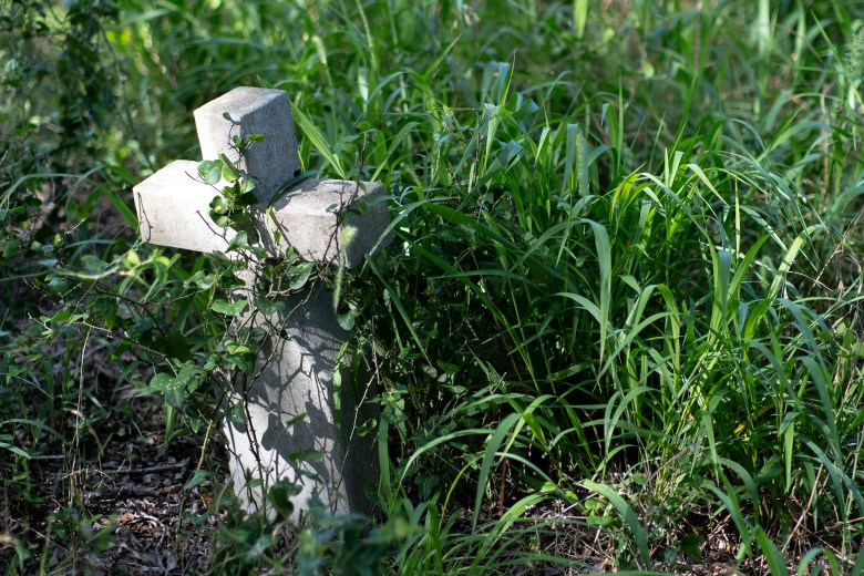 A vine tangles a headstone in an abandoned cemetery in Guadalupe County on Sunday.