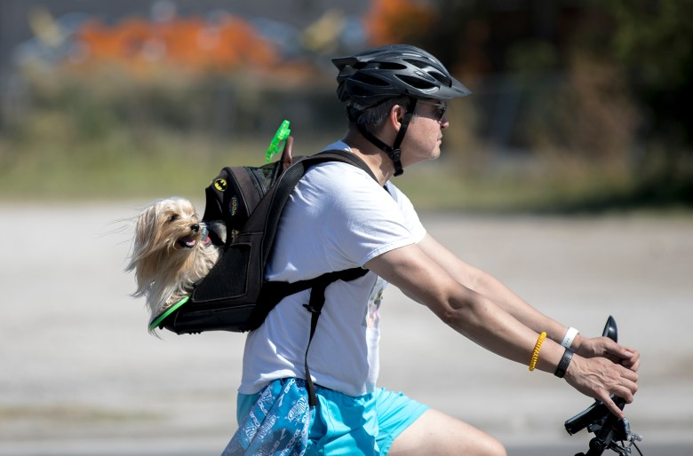 A man rides his bike with his dog in a backpack Sunday during Síclovía, the YMCA's biannual event that turns city streets into a safe place for families and friends to exercise and play.