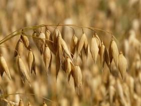 oats-8946_960_720
